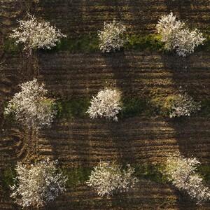 L'ensemble de l'équipe du Roy René exprime toute sa solidarité et son soutien aux agriculteurs, et notamment aux amandiculteurs touchés par le gel la semaine dernière.   Le Roy René est membre fondateur de France Amande, association française interprofessionnelle de l'amande et soutien la relance de cette culture en Provence. #soutien #agriculture #agriculteurs #franceamande #france #provence #gel #amandes #LeRoyRené #calisson #confiserie 📸 Crédits photo Camille Moirenc
