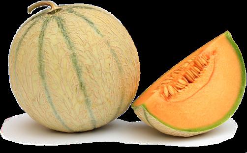 melon-seul2x